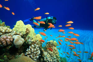 Iberotel diving holiday Egypt_by shutterstock